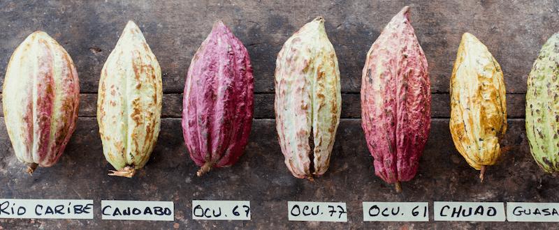 Willie's Cacao. Nieuw! Bean to bar uit de UK