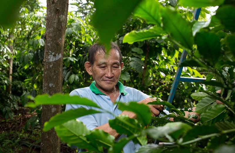 Kerstactie opbrengst : baby cacaobomen