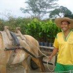 piura porcelana cacao farmer peru