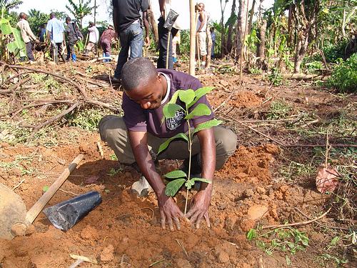 herplanten van virunga congo
