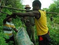 cacaobonen worden gewogen in de velden van papua