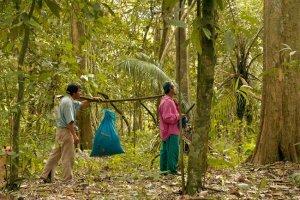 vervoer van cacao beni wild harvest