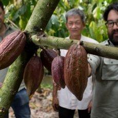 Chocolade Winnen & kerstgeschenk voor een cacaoboer