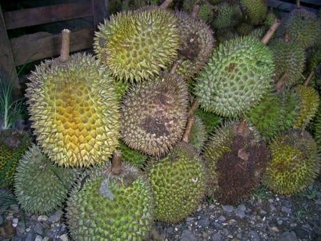 doerian vruchten stapel gebruikt voro chocolade naive litouwen